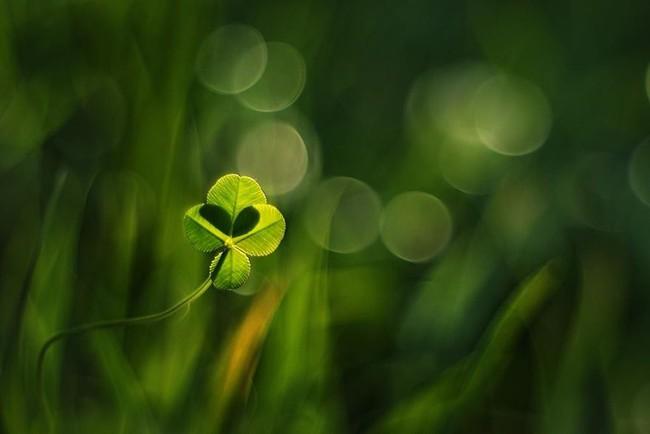 Bộ ảnh đẹp lung linh về ốc sên quấn quít bên hoa trong sương sớm - Ảnh 8.