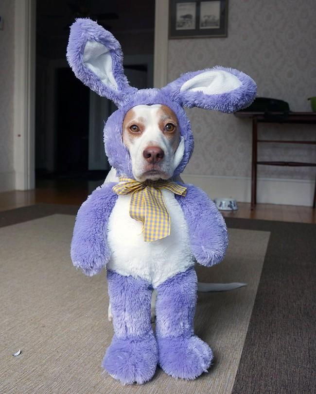 Đến fashionista cũng phải ngả mũ vì style thời trang của chú chó này - Ảnh 9.