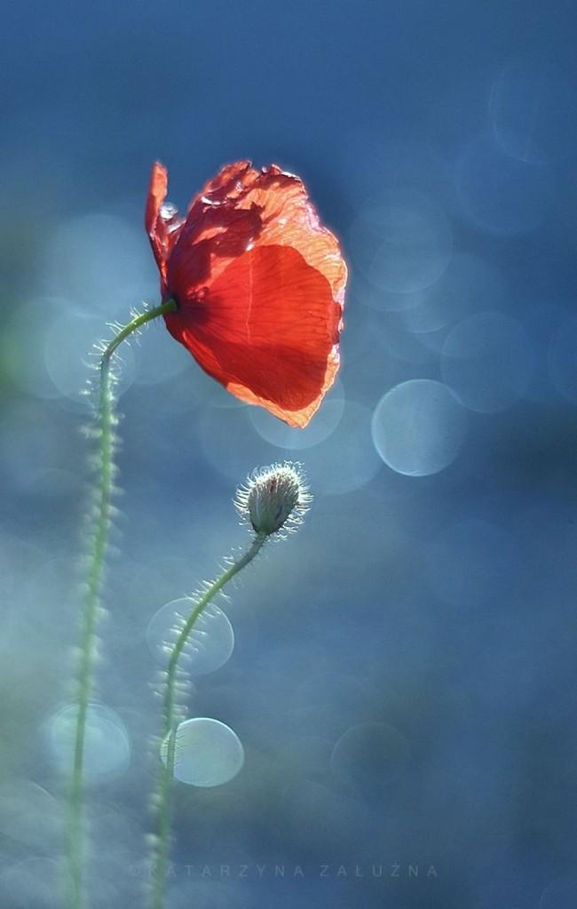 Bộ ảnh đẹp lung linh về ốc sên quấn quít bên hoa trong sương sớm - Ảnh 9.