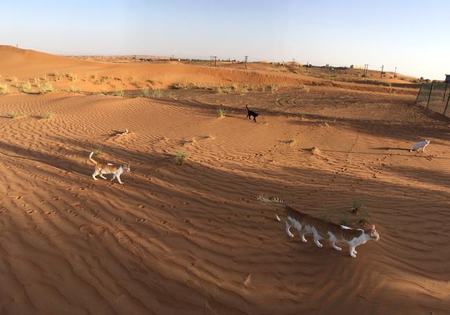 Bộ sưu tập những quả ảnh panorama về mèo lỗi đến khó hiểu - Ảnh 3.