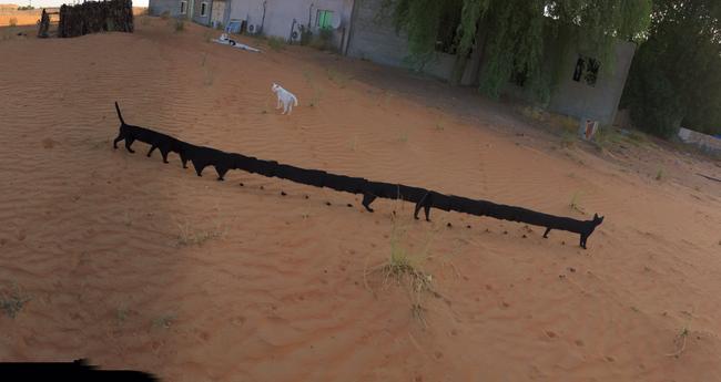 Bộ sưu tập những quả ảnh panorama về mèo lỗi đến khó hiểu - Ảnh 5.