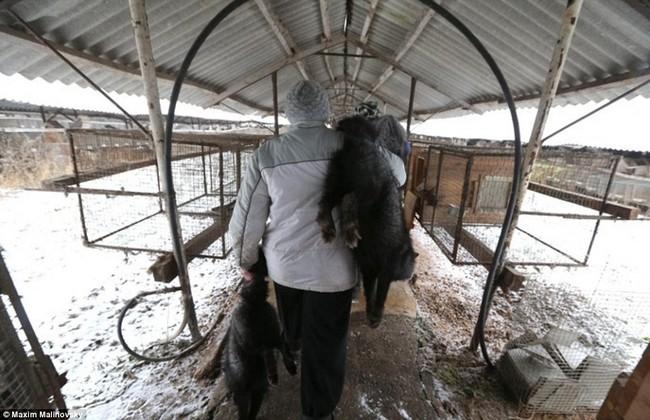 Địa ngục trần gian của những con thú bị lột da sống lấy lông - Ảnh 4.