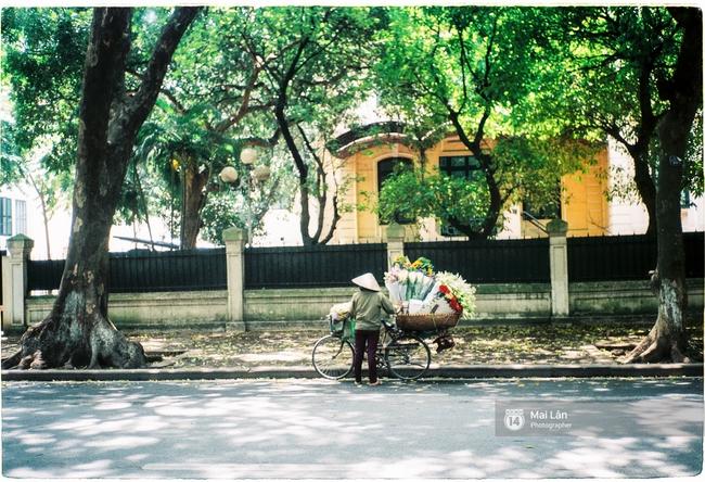 Những ngày Hà Nội rất nóng, nhưng lòng dịu lại vì cảnh lá rụng đẹp như mùa thu thứ 2 - Ảnh 3.