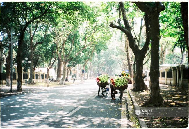 Những ngày Hà Nội rất nóng, nhưng lòng dịu lại vì cảnh lá rụng đẹp như mùa thu thứ 2 - Ảnh 2.