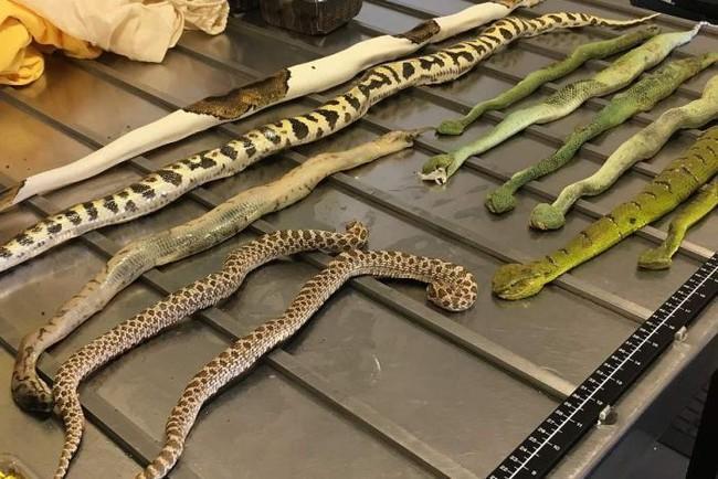 Úc: Tưởng là gói hàng đựng 2 đôi giày, ai dè mở ra thấy bên trong toàn rắn, nhện với bọ cạp - Ảnh 1.