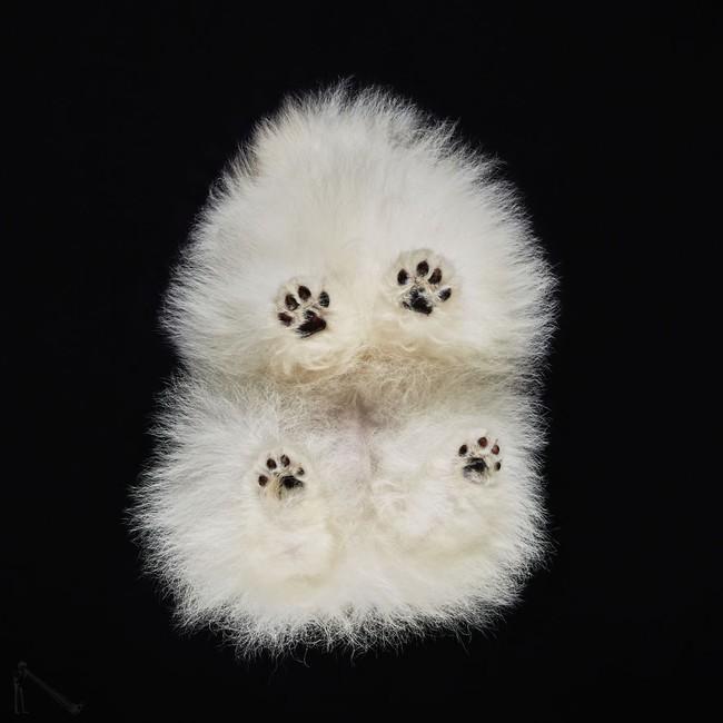Vẻ đẹp mới lạ của góc chụp phía dưới một chú chó - Ảnh 1.