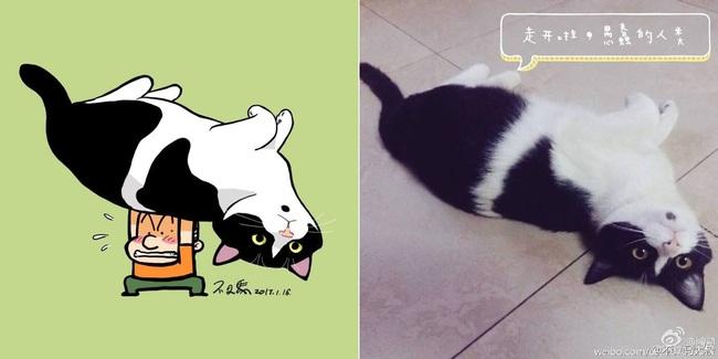 Nếu yêu mèo, bạn sẽ muốn phát điên trước chùm tranh siêu cấp dễ thương này - Ảnh 15.