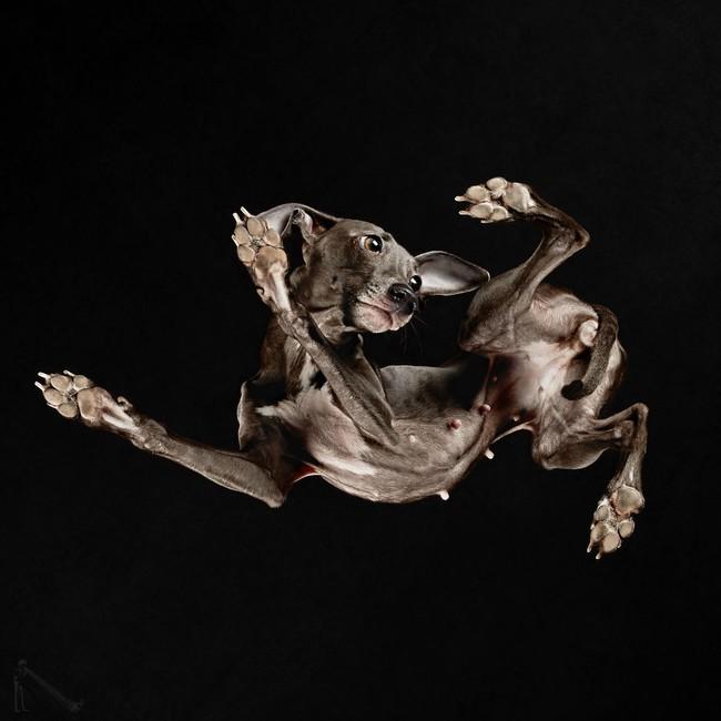 Vẻ đẹp mới lạ của góc chụp phía dưới một chú chó - Ảnh 7.