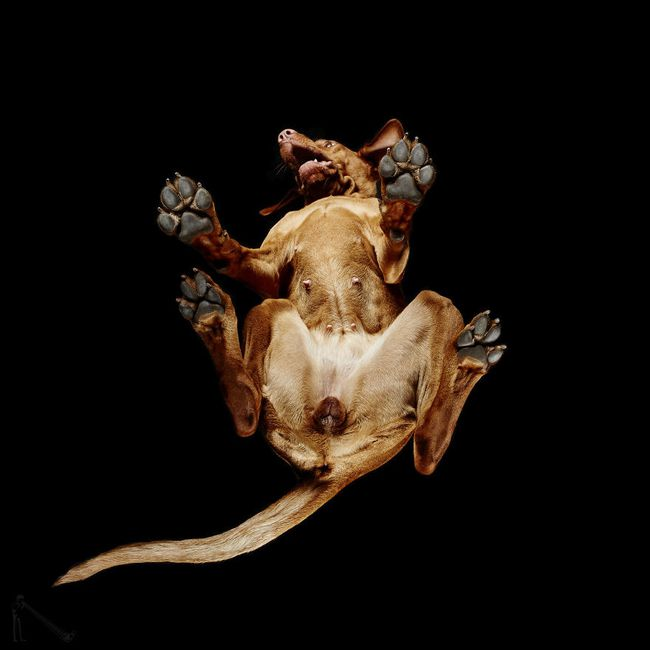 Vẻ đẹp mới lạ của góc chụp phía dưới một chú chó - Ảnh 21.