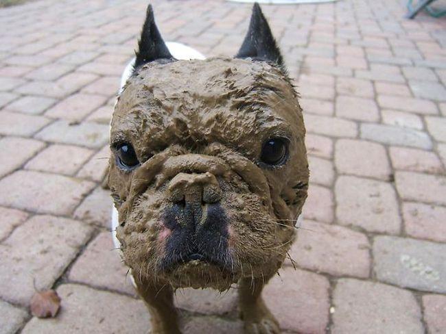 16 chú chó không dùng bột giặt nhưng cũng chẳng ngại gì vết bẩn - Ảnh 7.