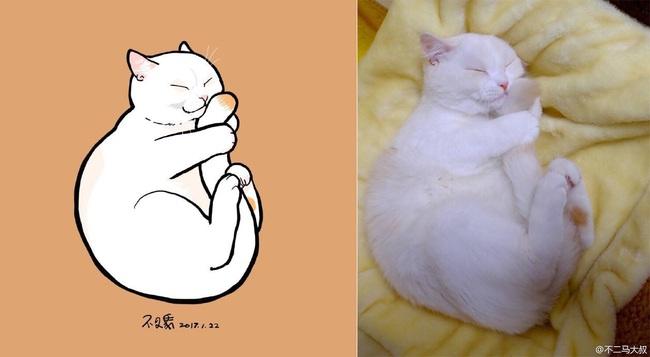 Nếu yêu mèo, bạn sẽ muốn phát điên trước chùm tranh siêu cấp dễ thương này - Ảnh 19.
