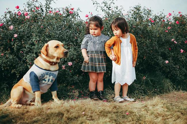 Khuôn mặt sợ chó siêu đáng yêu của cô bé má phính Hà Nội ăn đứt Vô Diện lạnh lùng - Ảnh 4.