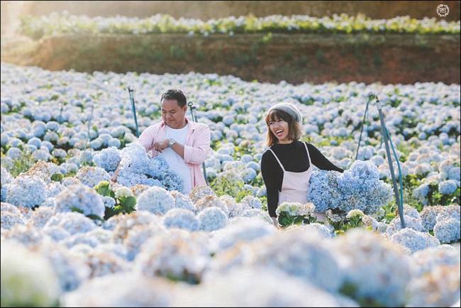 Cánh đồng hoa cẩm tú cầu đẹp mê hồn sẽ là điểm đến hot nhất ở Đà Lạt những ngày tới! - Ảnh 11.