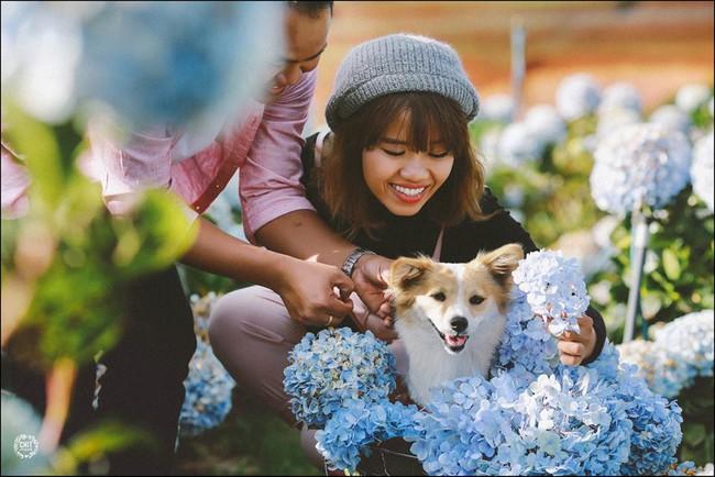 Cánh đồng hoa cẩm tú cầu đẹp mê hồn sẽ là điểm đến hot nhất ở Đà Lạt những ngày tới! - Ảnh 10.