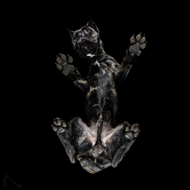 Vẻ đẹp mới lạ của góc chụp phía dưới một chú chó - Ảnh 19.