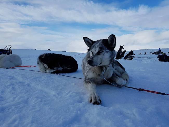 Chàng trai từng kêu gọi cộng đồng mạng vote cho mình đã hoàn thành thử thách chinh phục Bắc Cực! - Ảnh 10.
