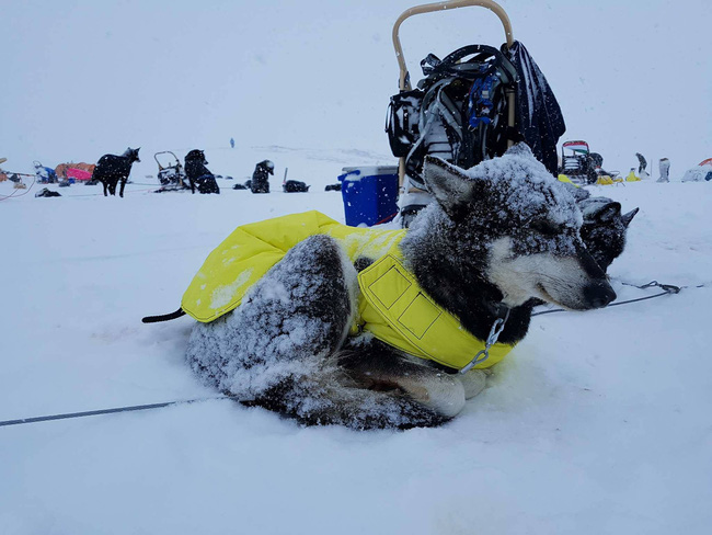 Chàng trai từng kêu gọi cộng đồng mạng vote cho mình đã hoàn thành thử thách chinh phục Bắc Cực! - Ảnh 11.
