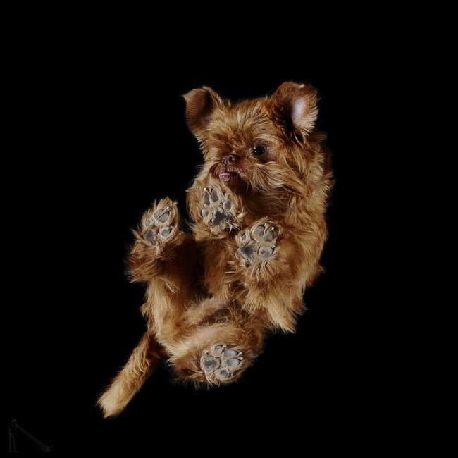 Vẻ đẹp mới lạ của góc chụp phía dưới một chú chó - Ảnh 23.