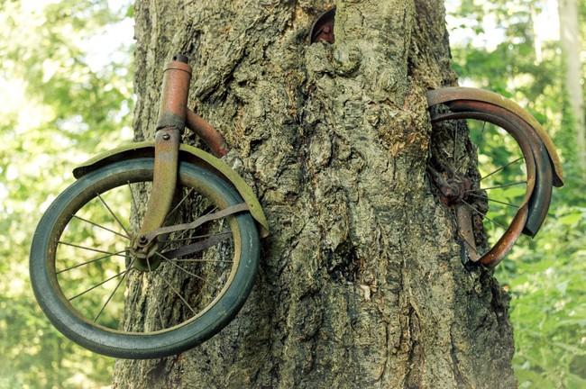 Cây xe đạp nổi tiếng ở Washington và câu chuyện ít người biết phía sau - ảnh 3