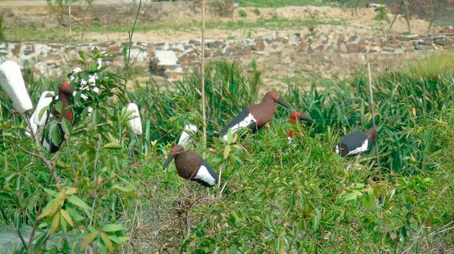 Ám ảnh đàn chim bị khâu mắt để nhử đồng loại ở Hà Tĩnh - Ảnh 3.