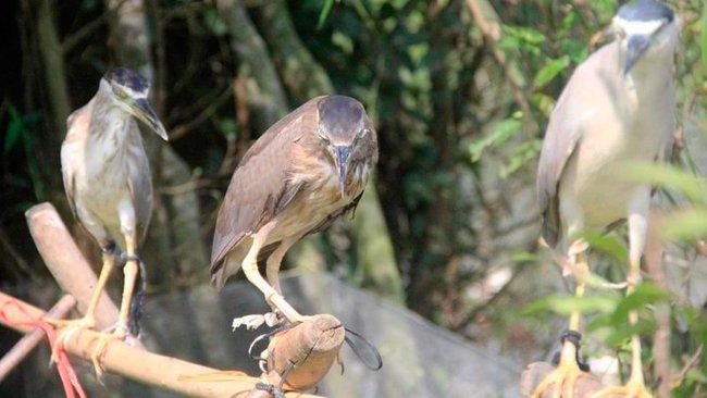 Ám ảnh đàn chim bị khâu mắt để nhử đồng loại ở Hà Tĩnh - Ảnh 7.