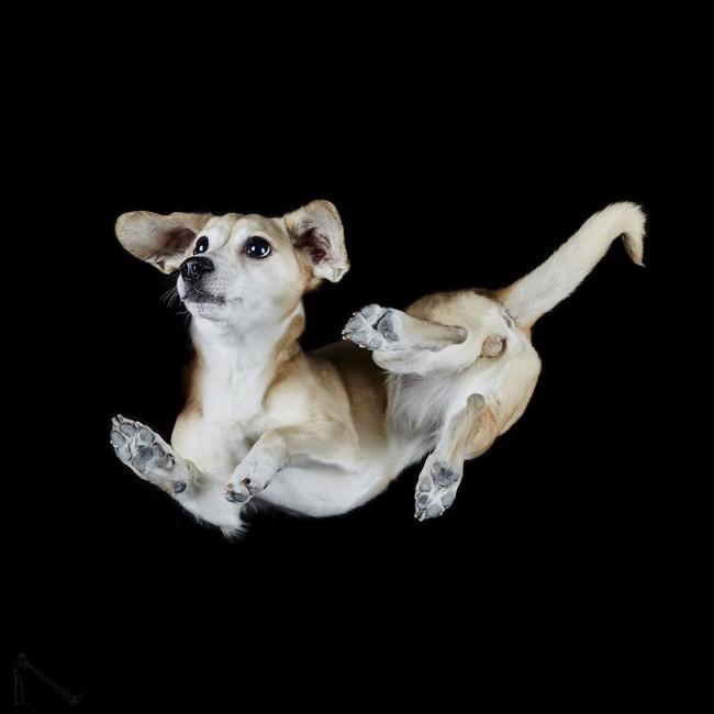 Vẻ đẹp mới lạ của góc chụp phía dưới một chú chó - Ảnh 17.