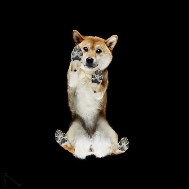 Vẻ đẹp mới lạ của góc chụp phía dưới một chú chó - Ảnh 9.