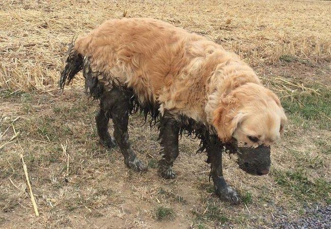 16 chú chó không dùng bột giặt nhưng cũng chẳng ngại gì vết bẩn - Ảnh 19.