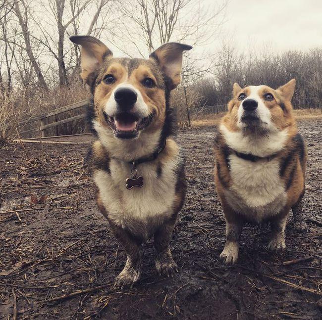 16 chú chó không dùng bột giặt nhưng cũng chẳng ngại gì vết bẩn - Ảnh 21.