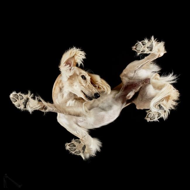 Vẻ đẹp mới lạ của góc chụp phía dưới một chú chó - Ảnh 13.