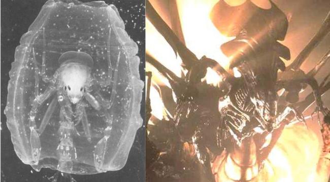 Bí ẩn đứng sau tạo hình khủng khiếp của Alien - Ảnh 7.