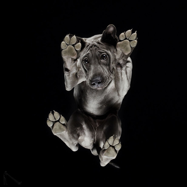 Vẻ đẹp mới lạ của góc chụp phía dưới một chú chó - Ảnh 15.
