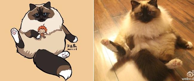 Nếu yêu mèo, bạn sẽ muốn phát điên trước chùm tranh siêu cấp dễ thương này - Ảnh 11.