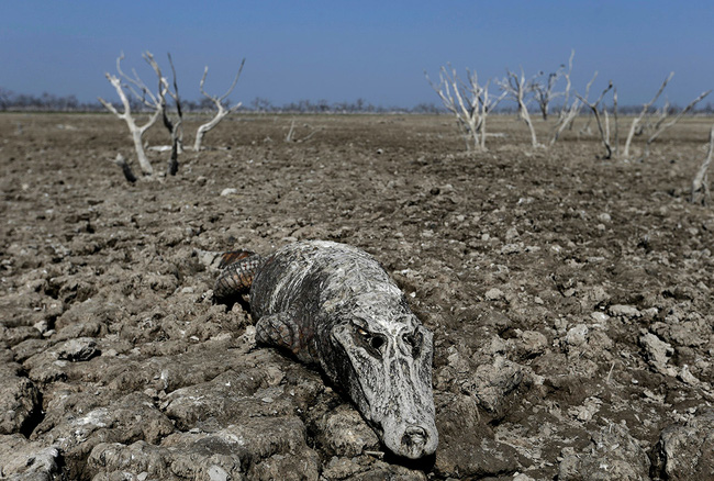 Ngày Nước thế giới, nhìn lại những bức hình ám ảnh về thực trạng khan hiếm nước trên toàn thế giới - Ảnh 8.