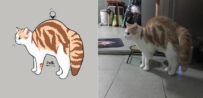 Nếu yêu mèo, bạn sẽ muốn phát điên trước chùm tranh siêu cấp dễ thương này - Ảnh 13.