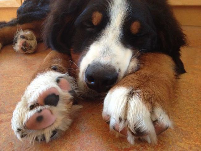 Bạn có tin: Chân chó nhà bạn có mùi... bỏng ngô? - Ảnh 3.