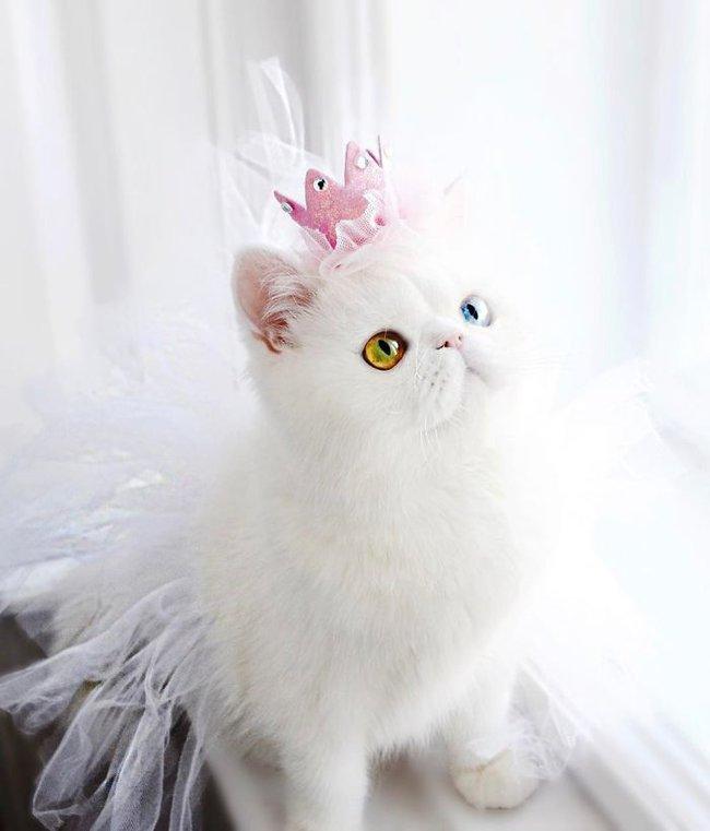 cat-eyes-heterochromia-iridis-pam-pam-16