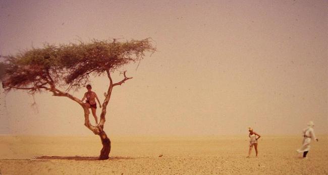 Chuyện chiếc cây cô độc nhất hành tinh và thông điệp ẩn giấu đằng sau đó - Ảnh 3.