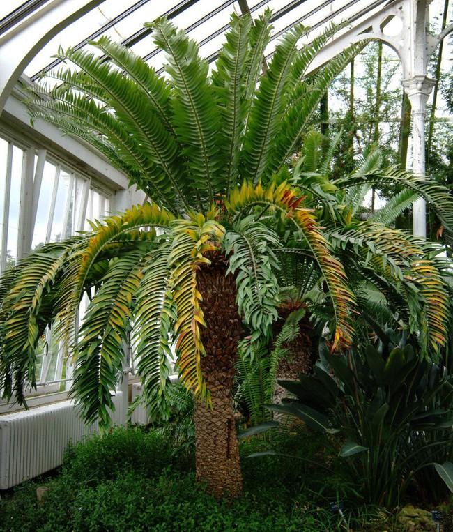 Đây Đích thị là loài cây FA nhất Trái Đất bởi dù muốn cũng không thể tìm Đươc bạn tình