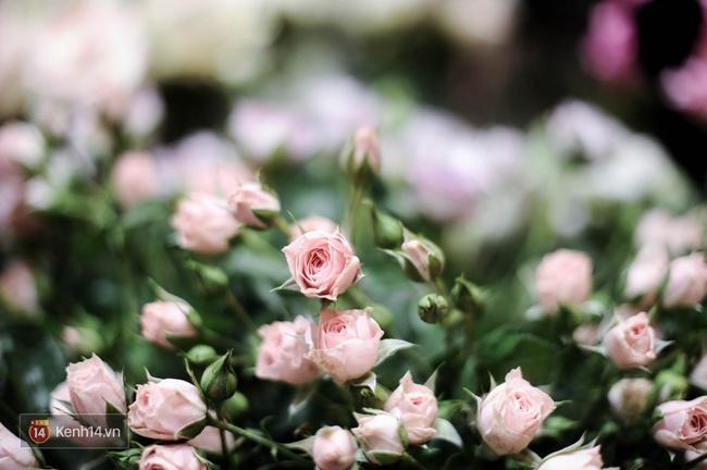 Đừng chỉ biết mỗi hoa hồng, Valentine năm nay còn rất nhiều loài hoa cực xinh để bạn tặng nàng! - Ảnh 2.