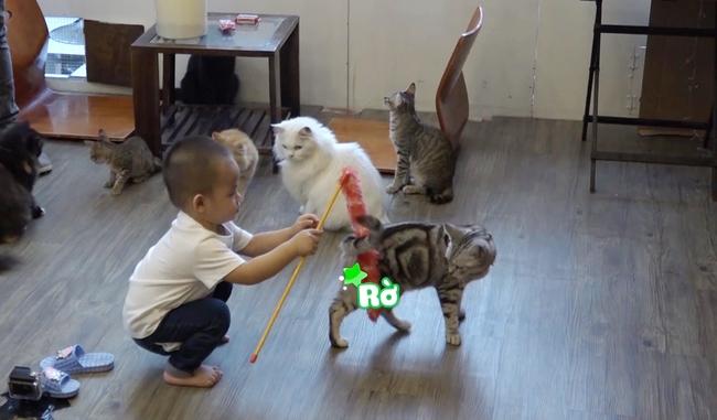 Đăng Khôi hốt hoảng khi con trai bỏ cả thức ăn của mèo vào miệng - Ảnh 9.