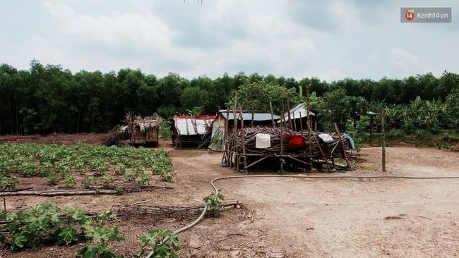Túp lều lá trên đồi tràm và câu chuyện tình giản dị của hai vợ chồng khuyết tật ở Đồng Nai - Ảnh 2.