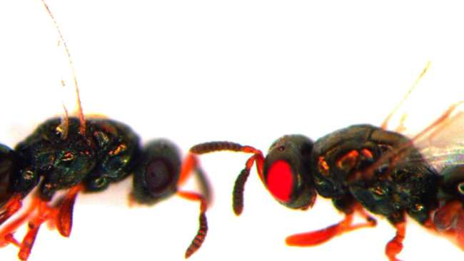 Tin được không: Khoa học tạo ra những con ong đến từ địa ngục và bước chuyển mình quan trọng của công nghệ gene - Ảnh 1.