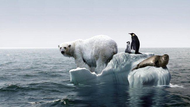 Những tấm hình giúp bạn nhận ra Trái đất đang lâm nguy đến mức độ nào - Ảnh 1.