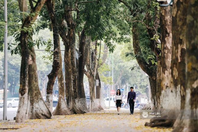 Những ngày Hà Nội rất nóng, nhưng lòng dịu lại vì cảnh lá rụng đẹp như mùa thu thứ 2 - Ảnh 13.