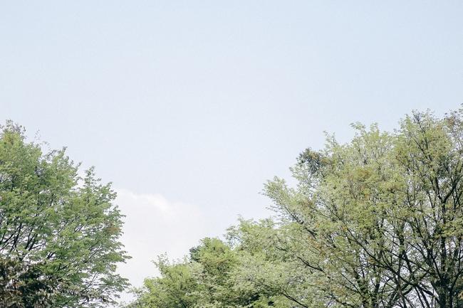 Hoa sưa nở rồi, tiết trời nồm ẩm tháng 3 của Hà Nội cũng vì thế mà dịu dàng hơn... - ảnh 6
