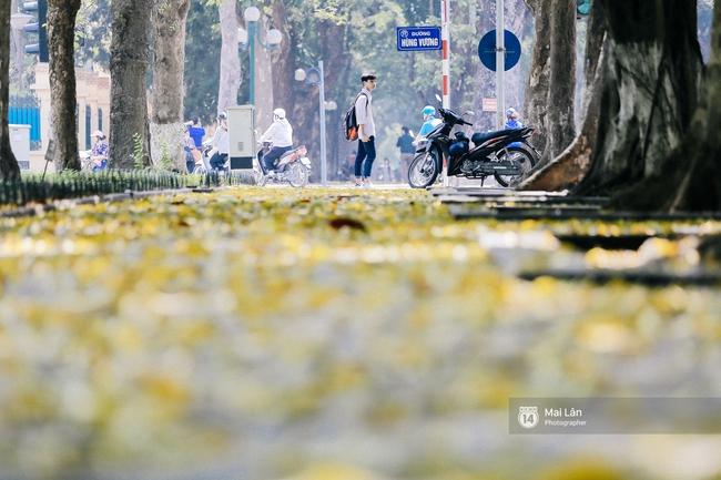 Những ngày Hà Nội rất nóng, nhưng lòng dịu lại vì cảnh lá rụng đẹp như mùa thu thứ 2 - Ảnh 5.