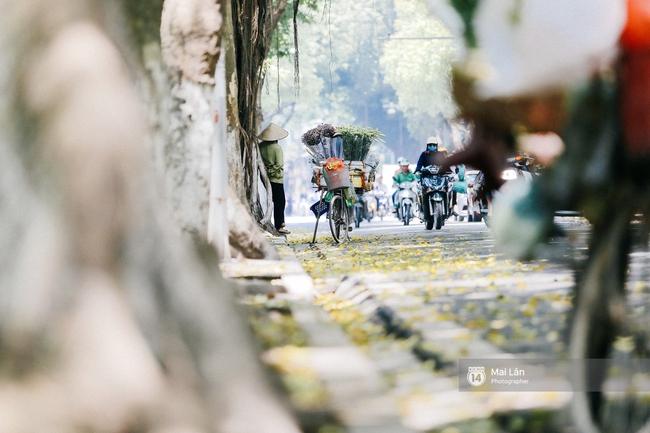 Những ngày Hà Nội rất nóng, nhưng lòng dịu lại vì cảnh lá rụng đẹp như mùa thu thứ 2 - Ảnh 7.