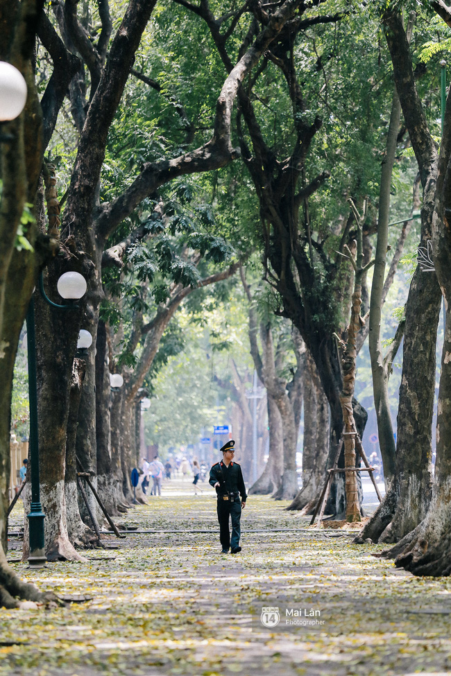 Những ngày Hà Nội rất nóng, nhưng lòng dịu lại vì cảnh lá rụng đẹp như mùa thu thứ 2 - Ảnh 9.