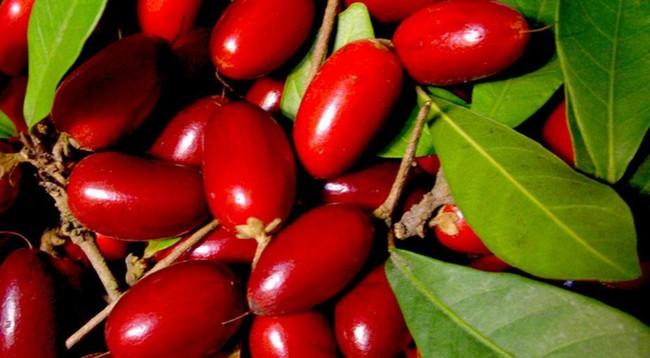 Chua cay mặn đắng đều trở thành ngọt ngào nếu ăn được quả thần mà Việt Nam đang có - Ảnh 1.